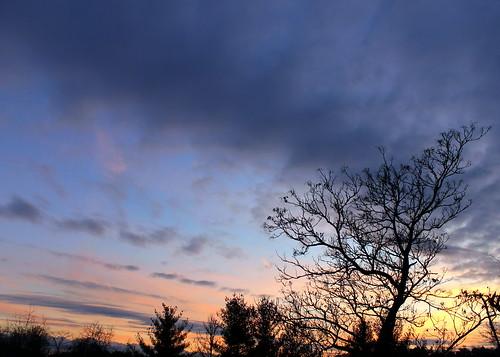 treesilhouette lastlight ashevillenc ashevillenorthcarolina ashevillesunset lastlightof2014