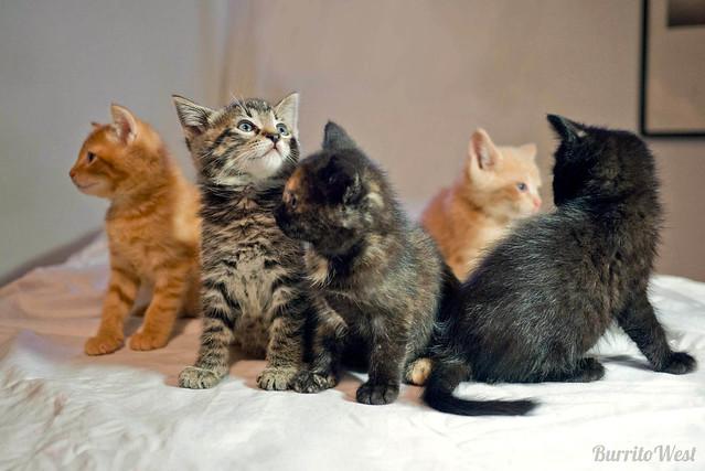kitten flock