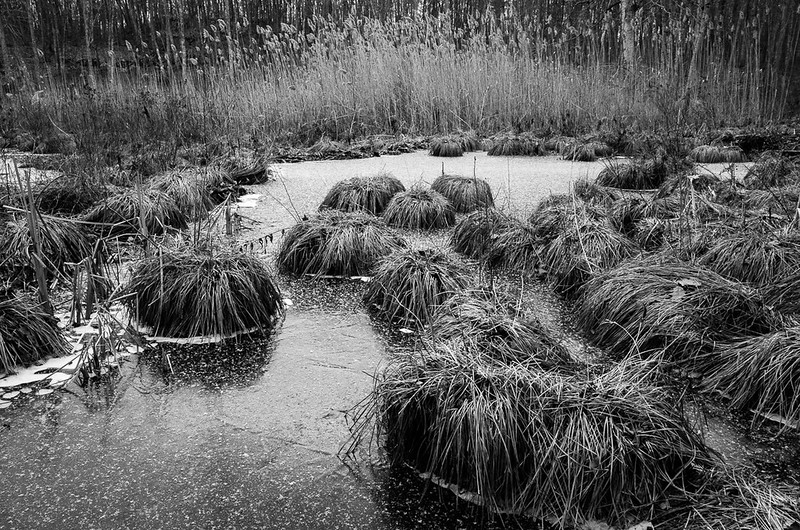 Floating grass mounds