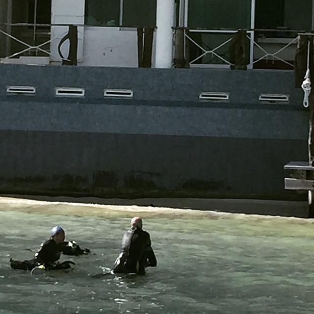 #openwatercourse #cancun #cancundiving #divecancun #cancunreefs #deeplife #deeplifedivers