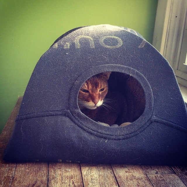 Baiza has been hanging out in this little tent that @chynagrove made! It's pretty dang cute. #baizagram