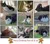 Merry Christmas from My 9 Cats