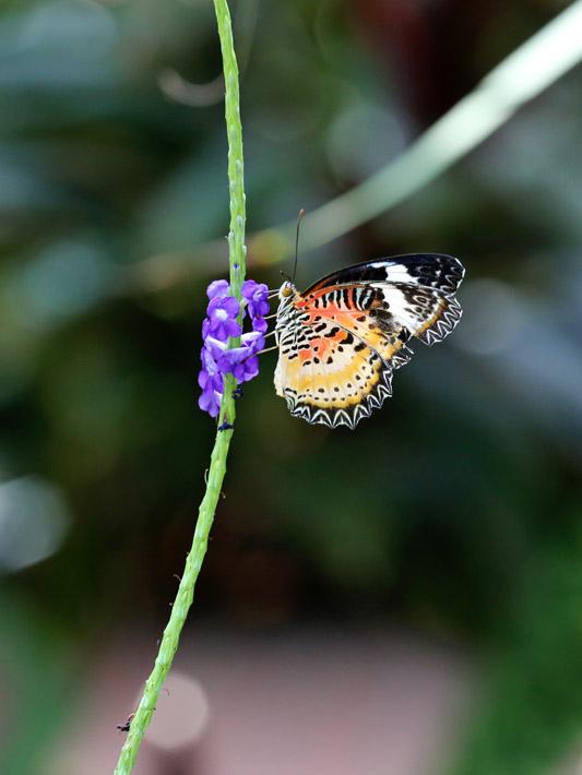 091014_01_butterfly06