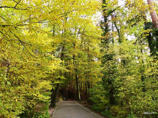 53-noch sehr grün im Tiergarten