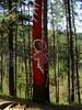 Bosque Pintado de Oma (6)