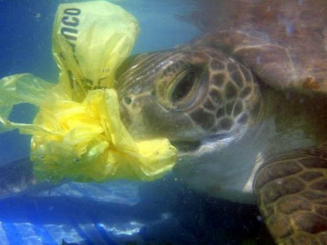 1_Sea_Turtle_Eats_Plastic.jpg