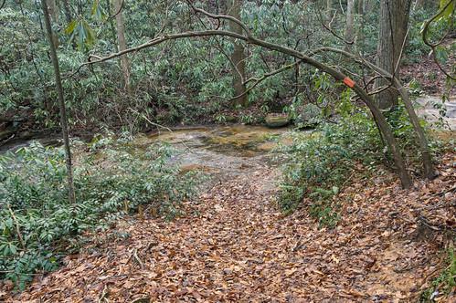 Coldspring Branch stream crossing #3