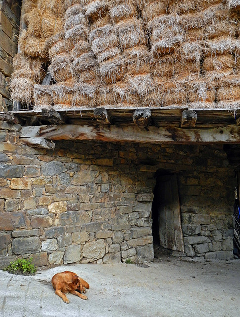 A Dog Guarding a Barn in a Village in Picos de Europa, Spain