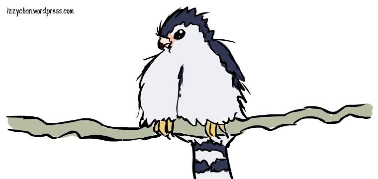 fluffy tiny falcon cute