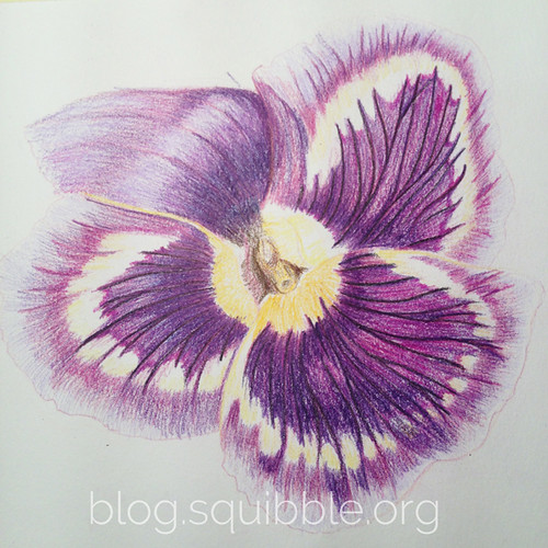 squibble_design_pansy_painting_week3_3