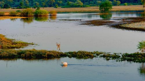 las trees sunset grass birds forest landscape swan bush poland polska backwater trawa ptaki drzewa krajobraz krzew zmierzch łabędź światłocień rozlewisko chairscuro