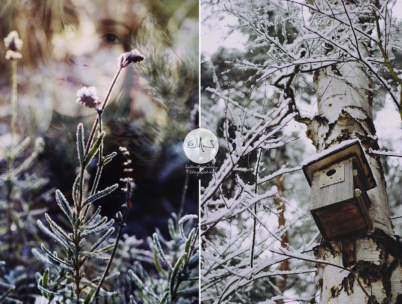 christmasangelsr_ 235 Kopie-horz
