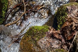 キラキラ輝く沢の流れ・・・水干の一滴は小さな沢になったのね~