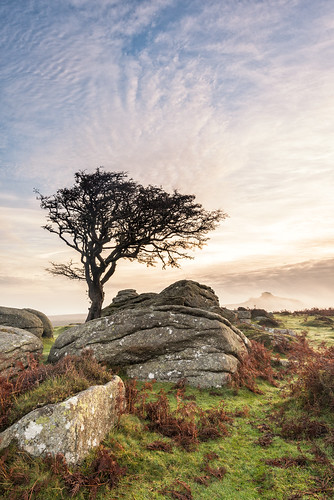 autumn tree sunrise rocks dartmoor emsworth
