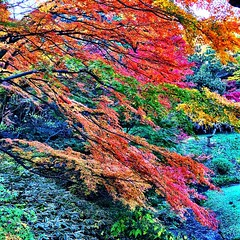 #rainbow trees, #autumn in #japan