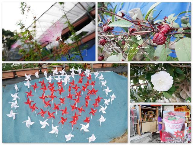 內湖採草莓圃咖啡下午茶 (29)