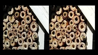 Busy Bees - 3d High speed movie clip - cross-view