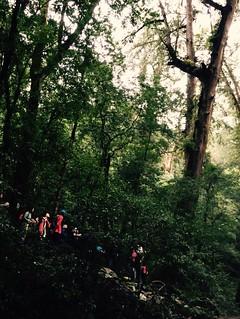 司馬庫斯森林,吸引遊客拜訪神木。來源:司馬庫斯Facebook