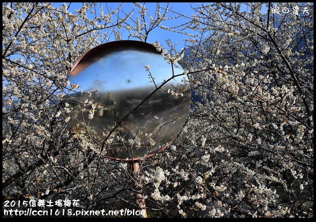 2015信義土場梅花DSC_9355