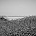 Grass by LalliSig