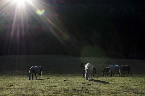 horse nikon sunflare tmsh d7000 grazinganimal 52in2014 1114sh2