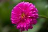 Photo:花 / Flower By kimtetsu