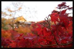 日本京都[南区]-東福寺.38