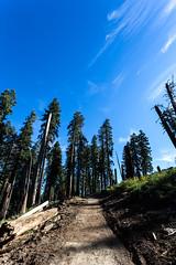 Kings Canyon & Sequoia - 147