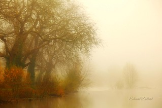 Fog on the river.