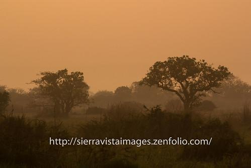 sunrise brush ssudan
