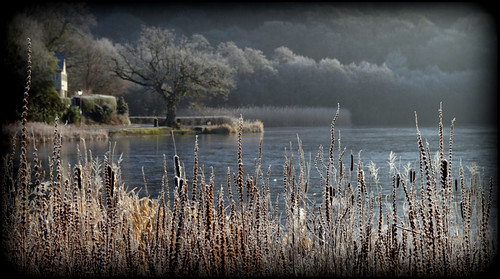 trees lake ice water reeds frost powys llandrindod