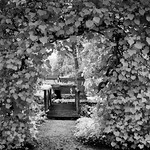 Swiss Garden_4
