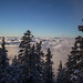 Above the Clouds, Snowbowl, Flagstaff, AZ