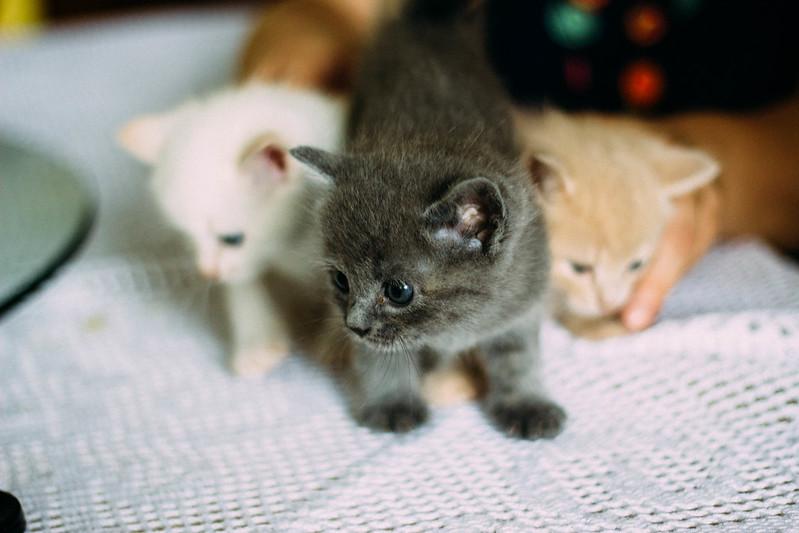 41/50 - kittens