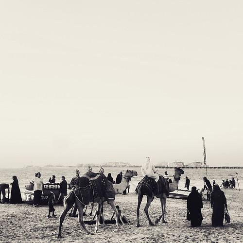 Camels, not horses on the beach.  #vscocam #Jumeirahbeach #Dubai #camels #beach #monochrome #vscomonochrome