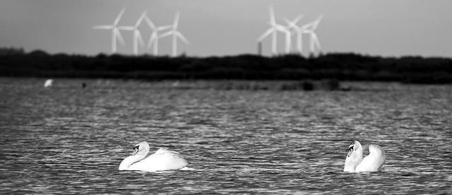 Wildlife+windpower