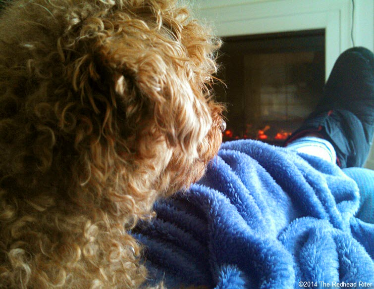 Surgery Is Not Fun For Anyone - Toy Poodle Spayed