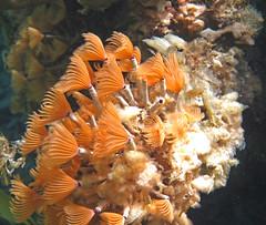 animal(0.0), anemone fish(0.0), fish(0.0), pomacentridae(0.0), sea anemone(0.0), coral reef(1.0), coral(1.0), marine biology(1.0), underwater(1.0), reef(1.0),