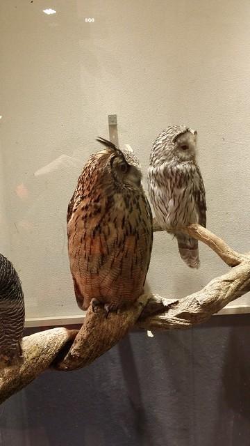 kiba owl cafe 3