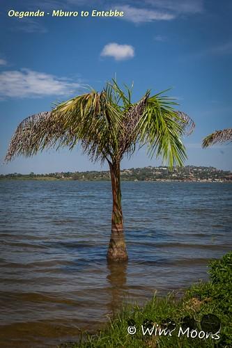 uganda uga entebbe mburo oeganda centralregion lulongo mburotoentebbe