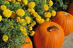 Dallas Arboretum-Oct. 2014-16