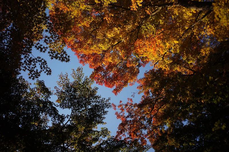 本多の森の紅葉 その2