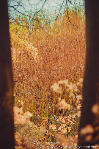 Autumn-232