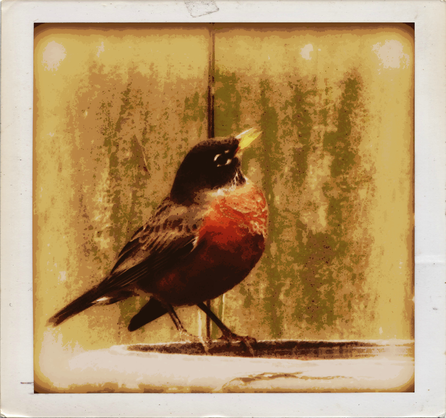 mr. robin