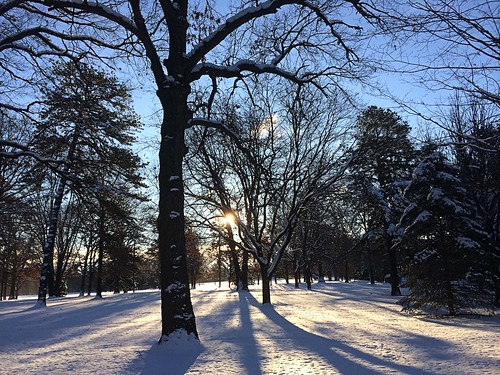 morning trees sun snow sunrise shadows apple5s