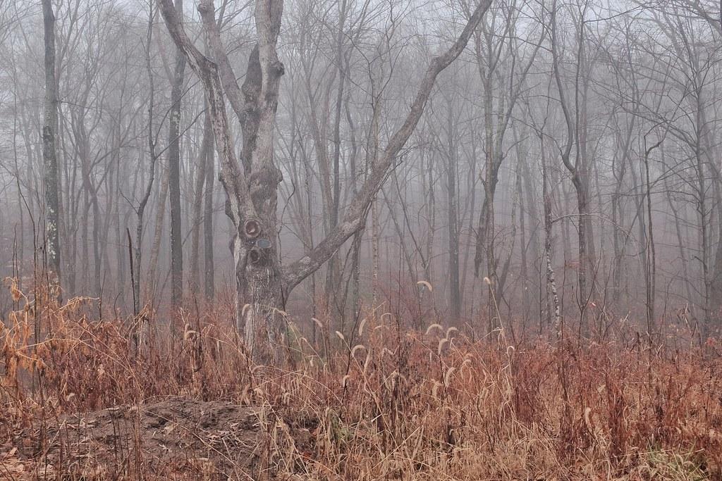 Christmas Tree Farms In Woodstock Ct Elevation Of Putnam