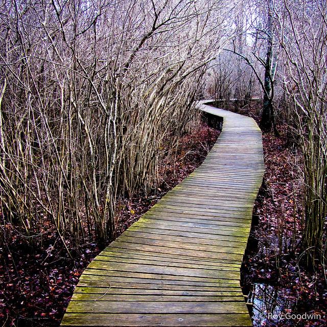 HellCat Swamp Trail