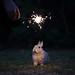 [18/52] Happy New Year! by emilykember