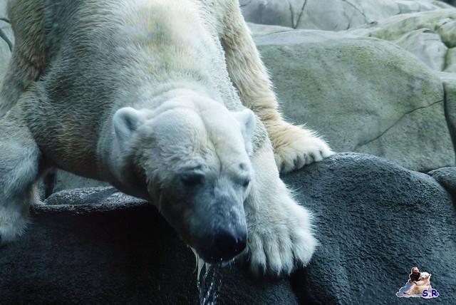 Tierpark Hagenbeck 2.01.2015 100