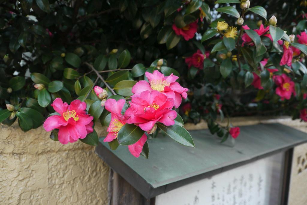 2013 Dec Tokyo Little Trip
